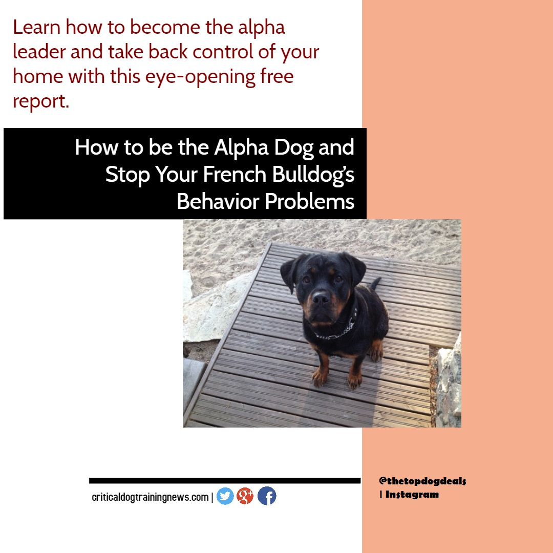 Rottweiler News Offers Free Report To Help Prevent Rottweiler