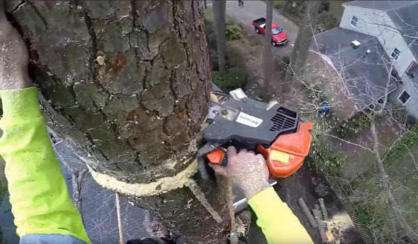 Tree Removal Service Mustang OK