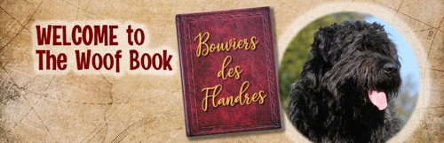 """TheWoofBook.com announces January 16th as National Bouvier de Flandres Day (say """"BOO-vee-yay dee FLAN-ders"""")."""