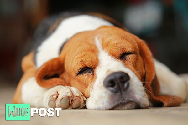 WoofPost.Com Dog Sleeping FACTS