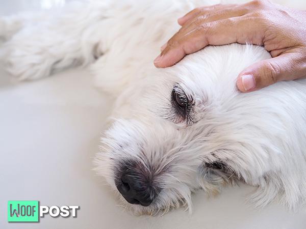 WoofPost.Com - Dog Dehydration