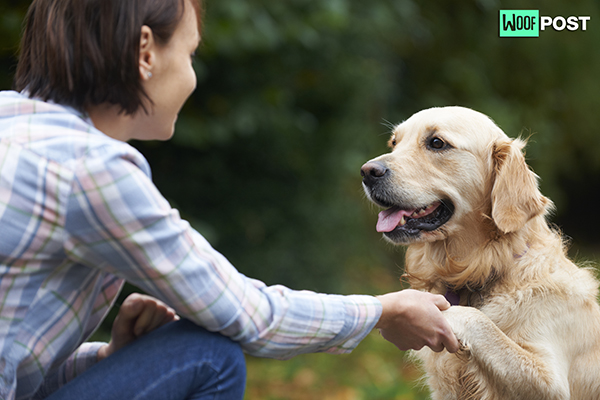 WoofPost.Com - Teaching A Dog To Shake Hands