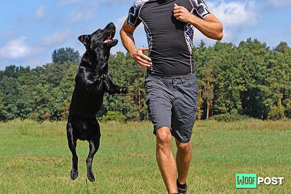 WoofPost.Com - Dog Jumping Training