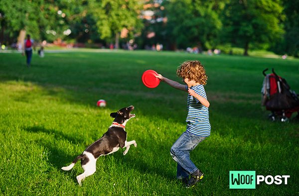 WoofPost.Com - Play Frisbee With Your Dog