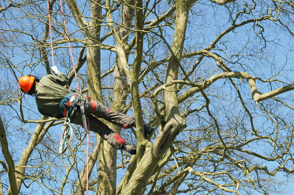 Steadfast Tree Care Spotsylvania
