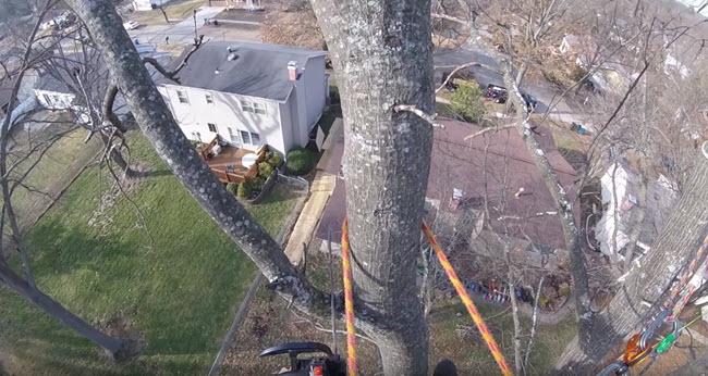 Steadfast Tree Care of Orange Virginia