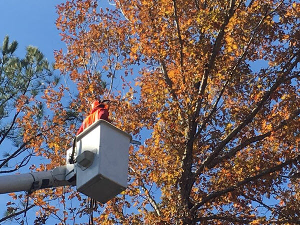 Steadfast Tree Care tree trimming & tree removal