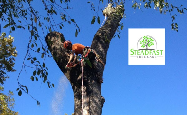 Fredericksburg Tree Service