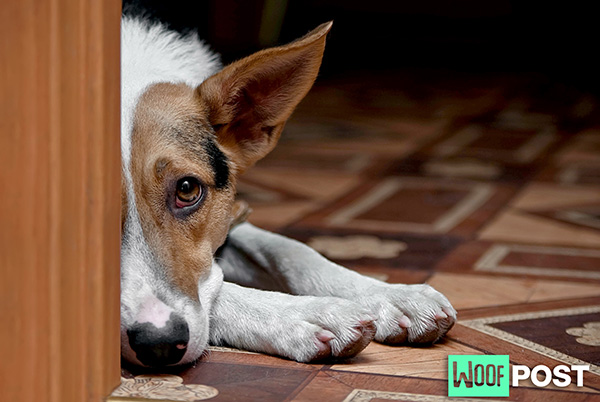 WoofPost.Com - WHAT TO DO WHEN YOUR DOG IS GRIEVING A LOSS