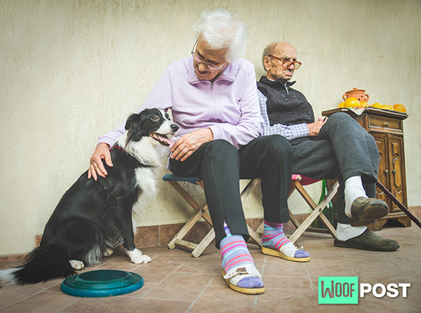 WoofPost.Com - DOGS CAN BRING COMFORT TO DEMENTIA PATIENTS AND THEIR CAREGIVERS