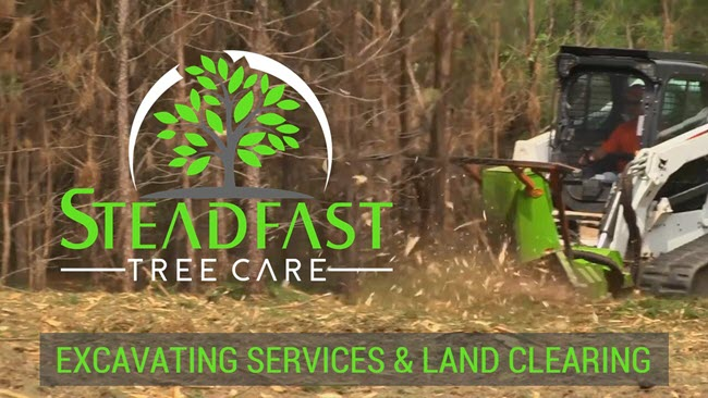 Tree removal, forestry mulching, and land clearing service in Milford Virginia