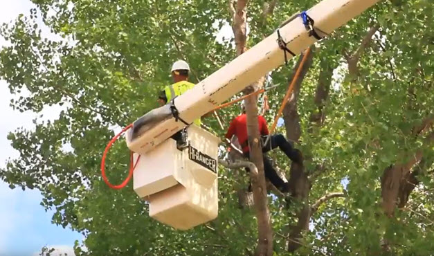 Tree trimming service being completed by Steadfast Tree Care