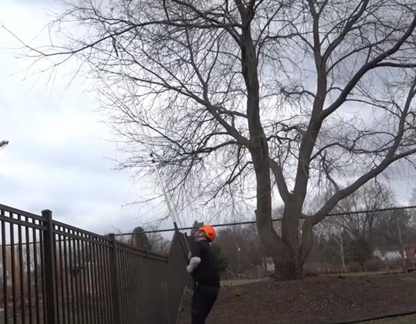 Rappahannock Academy Tree Trimming Service