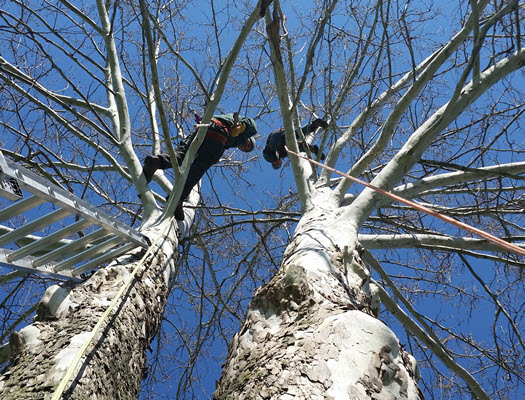 Tree removal service in Rappahannock Academy by Steadfast Tree Care