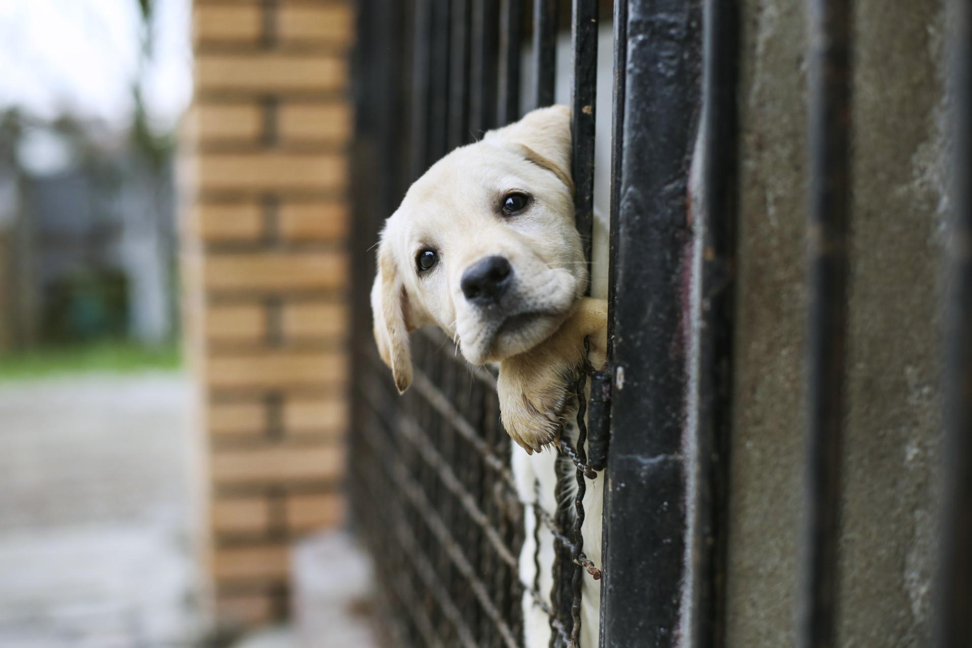 animal shelter donation charity