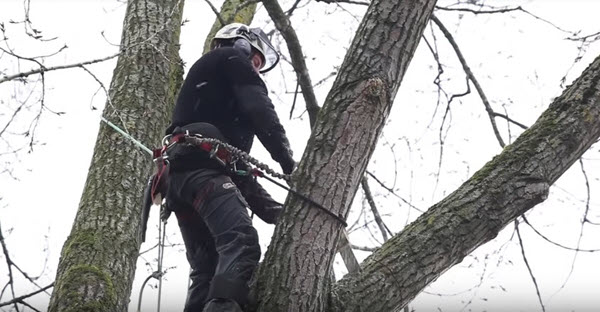 Tree Trimming Service King William VA - Steadfast Tree Care
