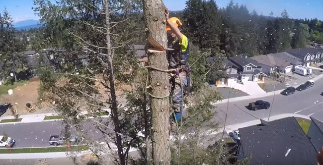 Tree removal service by Steadfast Tree Care