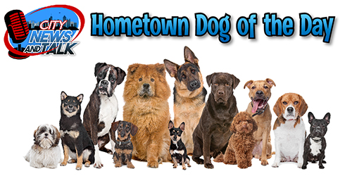 ChandlerNewsAndTalk.Com - Opening Hometown Dog Photo of the Day