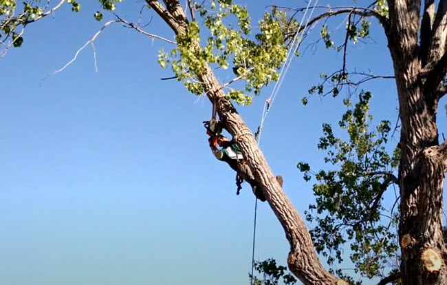 Tree trimming service in Manquin Virginia